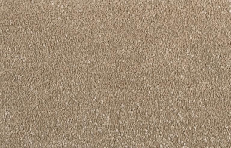 4264 Sand Dollar